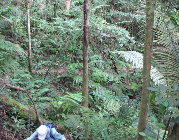 photo of forest around Bishop Hill trail