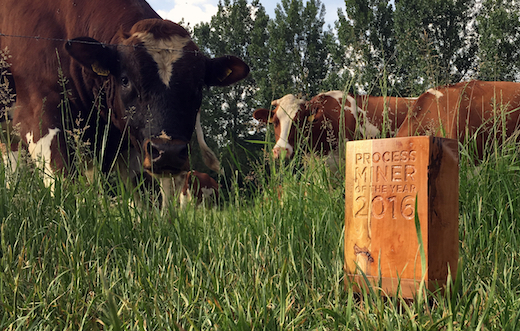The Process Miner of the Year Trophy Admired by Eindhoven's cows