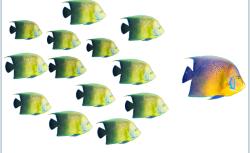ChartisCECLHero_Fish-606x-447966ee421bb5546c1cdfeb98c10d8c6ef967d1