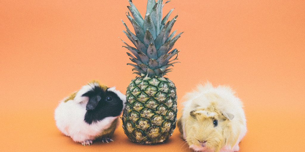 Pineapples and... pigs?