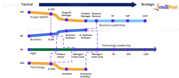 Career Path of a Business Analyst