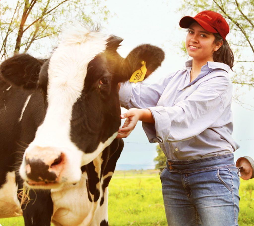 alqueria-pastora-vacas-lecheras